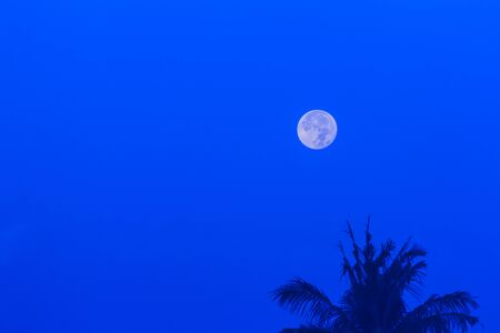 waxing gibbous: Moon over coconut tree Stock Photo
