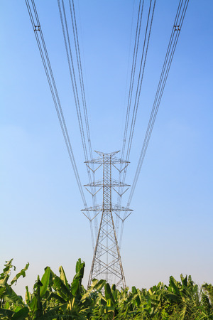 megawatts: Big electric tower pole over banana farm