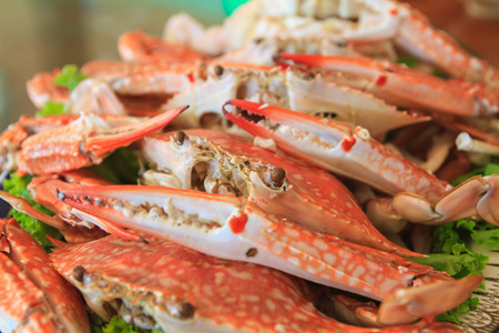 Steamed Crabs for serving photo