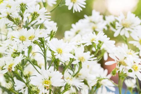 leaf cutter: White cutter flower in the garden Stock Photo