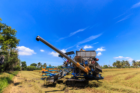 Combine harvester in rice field with beautiful blue sky