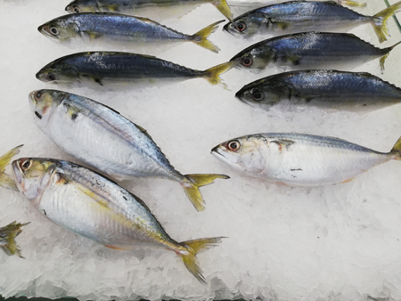 Mackerel fresh on ice in the market Stock Photo