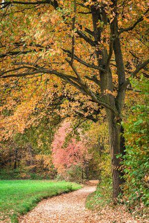 park path: Autumn Trees Park Path