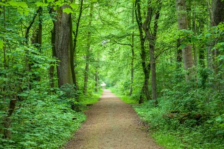 Los árboles del bosque de la primavera Sendero Parque