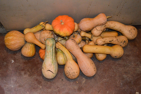 ailment: Pumpkins of different quality piled after harvest in subsistence agriculture