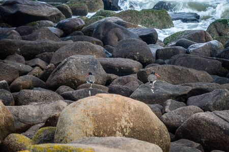 slope: birds on rocks in the sea slope