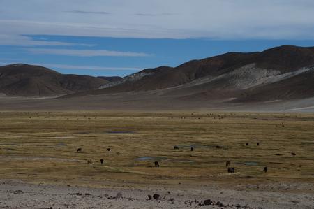 plain with yellow vegetation near small mountains Stock Photo