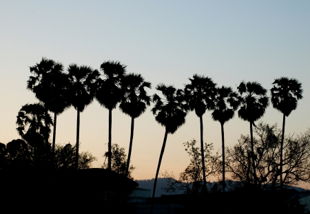 Silhouette of palm tree group photo