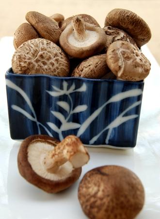 sapid: Shiitake mushroom, Authentic Chinese mushroom
