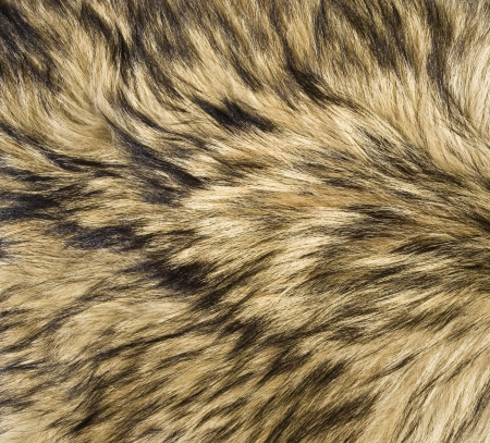 fur coat: Wolf Fur Texture Stock Photo