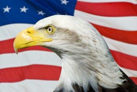 Eagle on an American Flag scene photo