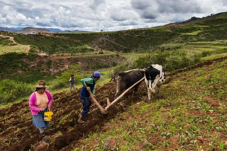 Maras, Peru - 23 december 2013: Een Peruaanse familie ploegt het land dicht bij de Moray Inca-terrassen, in de buurt van Maras, in de Heilige Vallei, Peru. De Moray-terrassen zijn een archeologische vindplaats waar de Inca's cirkelvormige terrassen bouwden waarvan men dacht dat ze werden gebruikt voor stu