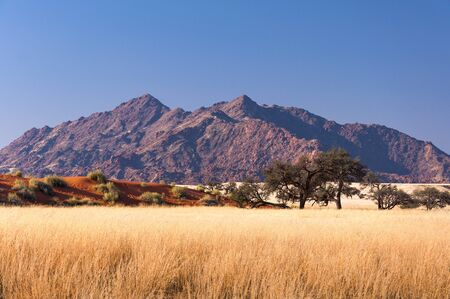 View of the Savannah in Namibia, Africa Stock Photo