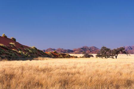 savannah: View of the Savannah in Namibia, Africa Stock Photo