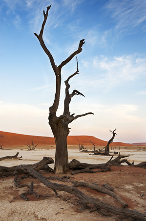 A dead tree in the Dead Vlei, Sossusvlei, Namibia