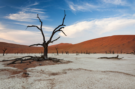 wheather: Dead trees and red dunes in Sossusvlei, Namibia Stock Photo