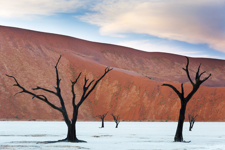Dead trees and red dunes in the Dead Vlei, Sossusvlei, Namibia
