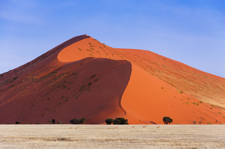wheather: Herd of Springbok passing in front of a red dune in Sossusvlei, Namibia; Concept for traveling in Africa and Safari