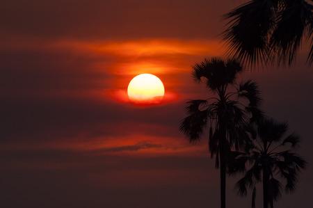 okavango delta: Silhouette of palm trees in the Okavango Delta, in Botswana; Concept for travel safari and travel in Africa