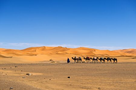 Merzouga, Morocco - April 12, 2016: Berber man leading a camel caravan in the Erg Chebbi dunes in Morocco.
