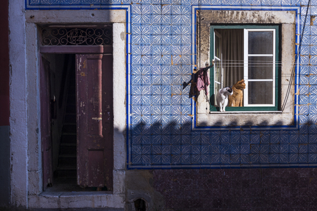 bica: Two cats at a window in an old building in the traditional Bica neighborhood in Lisbon, Portugal