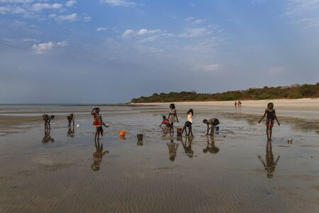 Orango Island, Guinea-Bissau - February 2, 2018:  Group of children collecting cockles in the beach at the island of Orango at sunset.