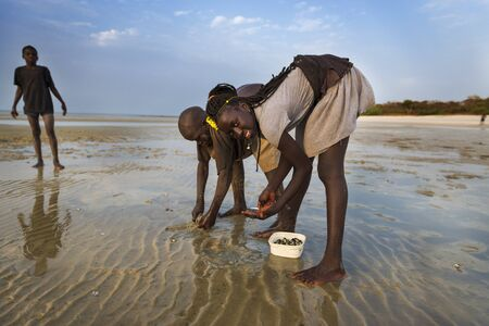 Orango Island, Guinea-Bissau - February 2, 2018: Children collecting cockles at the beach in the island of Orango at sunset.