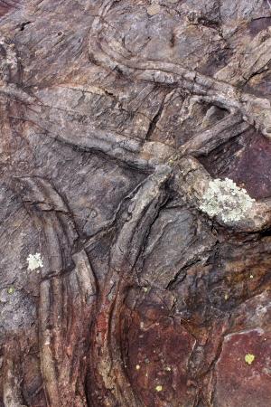 garcia: Trilobites fossil, Penha Garcia, Portugal Stock Photo