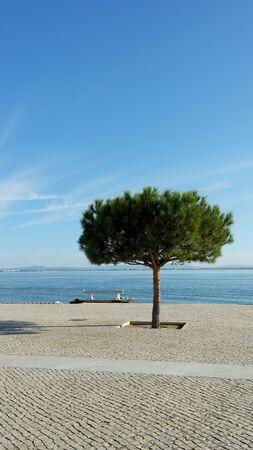 riverside tree: Riverside, Lisbon, Portugal