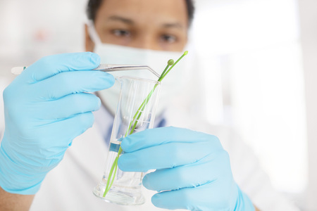 Young scientist in life science laboratory