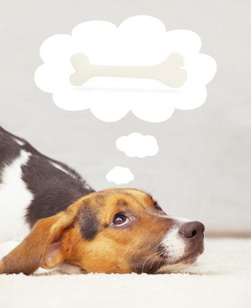 Cute puppy thinking of bone