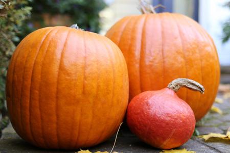 Herbst und Kürbisse gesetzt Lizenzfreie Bilder