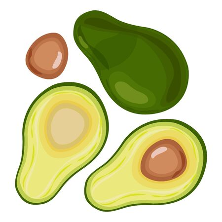 Ripe avocado with bone. Halved avocados. Vector illustration.