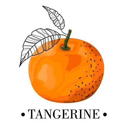 Card, banner, print, sticker, promotional material with tangerine and stylized leaves. Orange citrus. Vector illustration.