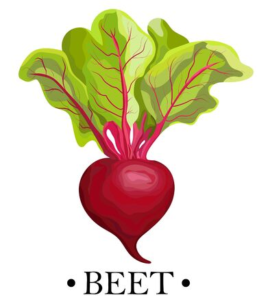 Ripe red beets with green leaves. Card, banner, sticker, poster, print. Vector illustration. ベクターイラストレーション