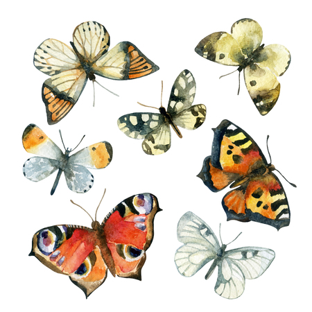 Watercolor butterfly set. Hand painted butterflies isolated on white background Stock Photo