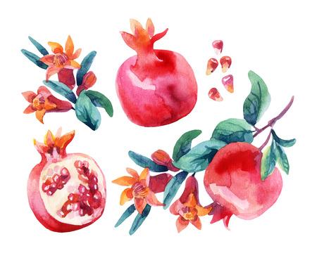 수채화 석류 꽃 가지와 과일을 설정합니다. 석류 과일, 열매, 꽃은 흰색 배경에 고립입니다. 손으로 그린 그림