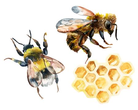 水彩の蜂、蜂をしくじるとハニカムを設定します。蜂蜜ラベル、デザイン テンプレートのコレクションです。手描きのイラスト 写真素材 - 61952770