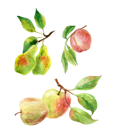 Apple, pear and peach branches with leaves and fruits. Watercolor apple, pear, peach fruits isolated on white background. Summer harvest. Fruit branch set. Hand drawn illustration