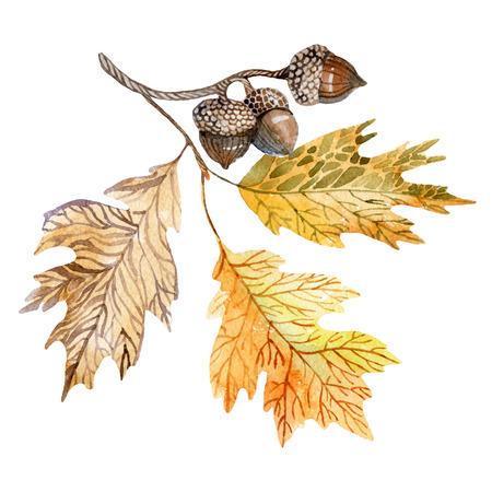 Ilustración acuarela con bellotas y hojas de roble. Puede ser utilizado para el patrón, envoltura, tela, fondo, etc. Foto de archivo - 64696801