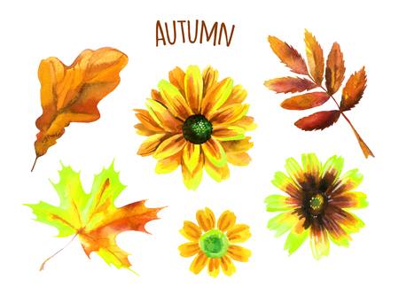 golden daisy: Watercolor autumn set of leaves and flowers. Hand painted illustration Stock Photo
