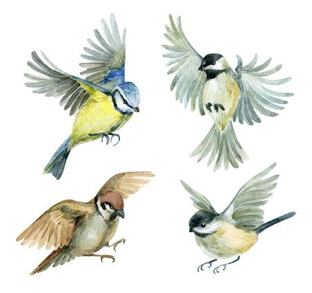 Pájaros voladores conjunto. Pájaros de la acuarela - gorrión, titmouse y chickadee. Ilustración pintada a mano aislada sobre fondo blanco
