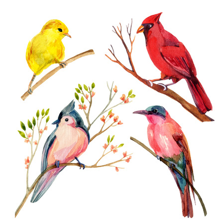 Watercolor bird set: red northen cardinal, tufted titmouse, yellow warbler and bee-eater. Hand painted illustrations isolated on white background