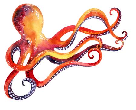 Aquarelle aux pieuvres. Illustration peinte à la main Banque d'images - 71658301