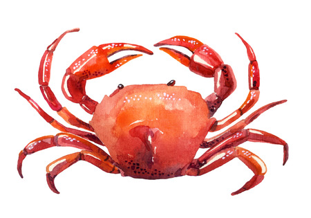 watercolor crab isolated on white background. Hand painted illustration