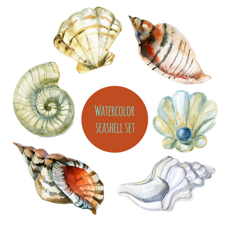 mollusc: Watercolor seashell set. Hand painted raster illustration Stock Photo