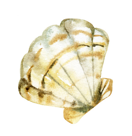 mollusc: Seashell watercolor illustration. Hand drawn sketch Stock Photo