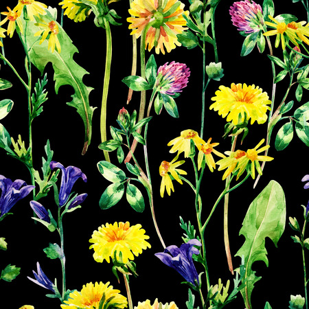 Meadow watercolor flowers seamless pattern. Watercolor wild bellflowers, dandelion, daisy and herbs background. Hand painted natural illustration