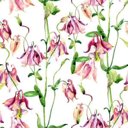 sepals: Watercolor meadow bellflowers seamless pattern. Watercolor wild columbine flowers on white background. Hand painted illustration