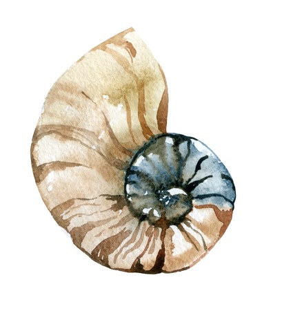 fondali marini: A mano pittura ad acquerello conchiglia. Nautilus illustrazione raster